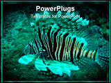 PowerPoint Template - ion fish (Devil Fire fish) swimming in the warm waters of the Indian Ocean off the coast of Souther