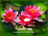 PowerPoint Template - Beautiful blooming red water lily lotus flower with green leaves in the pond
