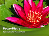 PowerPoint Template - Bright pink lotus flower with green leaves in a pond