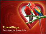 PowerPoint Template - A couple of kissing parrots with a heart-shaped frame as background