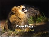 PowerPoint Template - ferocious lion