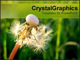 PowerPoint Template - Close-up of airy dandelion.
