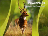 PowerPoint Template - Male Axis or Spotted Deer (Axis axis) INDIA Kanha National Park