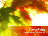 PowerPoint Template - Close-up of maple leaves against white background