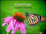 PowerPoint Template - Monarch butterfly resting on a summer flower