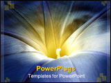 PowerPoint Template - Close up of morning glory in vivid blue and yellow