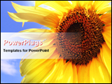 PowerPoint Template - close view of sunflower