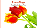PowerPoint Template - beauty of tulips