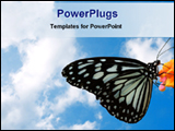 PowerPoint Template - a butterfly in a puffy