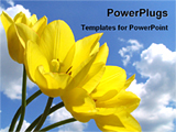 PowerPoint Template - blooming yellow tulips
