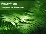 PowerPoint Template - sunlight falling on fern leaves