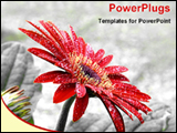 PowerPoint Template - bloomed red flower after rain