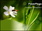 PowerPoint Template - A little Bee