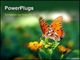 PowerPoint Template - butterfly on a lantana plant