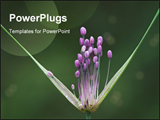 PowerPoint Template - Blossom of flower