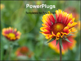 PowerPoint Template - Beautiful flowers in the Nikitas park. Krimea Ukraine.