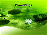 PowerPoint Template - Water lily and duckweed in green pond