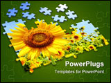 PowerPoint Template - Sunflower - 3d puzzles. Objects isolated over white