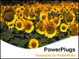 PowerPoint Template - Hundreds of sunflowers in a field