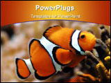 PowerPoint Template - Clown fish, grainy at higher resolutions
