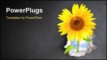 PowerPoint Template - New life, Sunflower in hole
