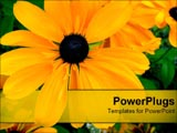 PowerPoint Template - orange flower