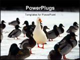 PowerPoint Template - do you stand out from the crowd? a picture of a white domesticated duck in a group of mallard ducks.