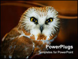 PowerPoint Template - Saw Whet Owl in the wild from Michigan