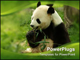 PowerPoint Template - a Giant panda in a field with a tree and grass