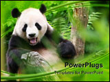 PowerPoint Template - A smiling panda bear in a zoo, framed by leaves.