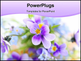 PowerPoint Template - pansies on white background. Floral border