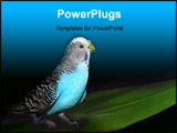 PowerPoint Template - Parrot on a black background with a green leaf