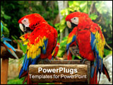 PowerPoint Template - couple of red parrots in a perch