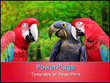 PowerPoint Template - Three colorful parrots meeting together