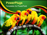 PowerPoint Template - a row of little parrots.