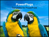 PowerPoint Template - close-up of a beautiful blue-and-yellow macaw