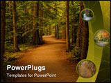 PowerPoint Template - peaceful path in the forest. mostly cedar trees.