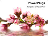 PowerPoint Template - Peach blossom in spring