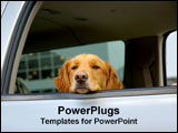 PowerPoint Template - A Golden Retriever puts his head out the window of a car.