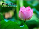 PowerPoint Template - An outstanding lotus flower beside a leaf