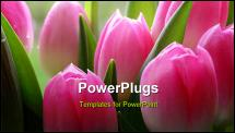 PowerPoint Template - lots of pink tulips - a close-up