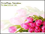 PowerPoint Template - Bright pink tulips lay on a white background.