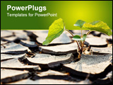 PowerPoint Template - Plant fighting drought as a metaphor for hope or determination