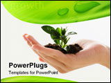 PowerPoint Template - Image of female hand holding the small plant