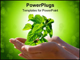 PowerPoint Template - Plant in woman hands isolated over white background