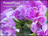 PowerPoint Template - OLYMPUS DIGITAL CAMERA photo of flowers manipulated in PSP