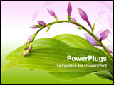 PowerPoint Template - Purple hosta flowers on branch and leaves
