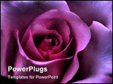 PowerPoint Template - Macro close-up of Valentine