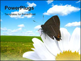 PowerPoint Template - Butterfly and Nature