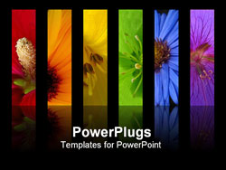 PowerPoint Template - flower rainbow is made on different flowers